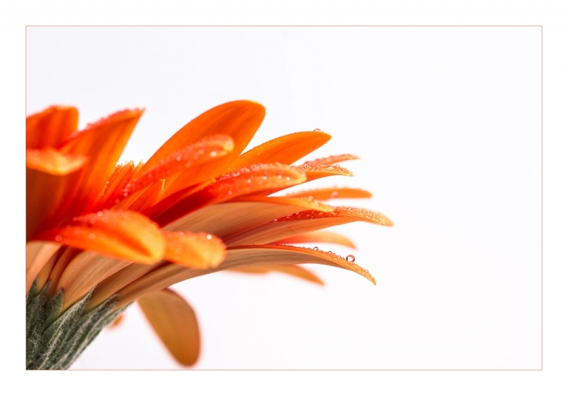 Franke_Ruth_512067_PB3_fine-art-orange